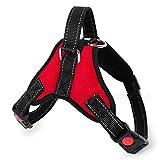 Strapazierfähiges Hundegeschirr mit Leine,Halsband, verstellbar,Martingal,geflochtenes Halsband, Schlaufe, rutschfest,robuster Metall-Clip,Anti-Verdreh-Sicherheits-Verriegelung,Haustier-Trainingsleine