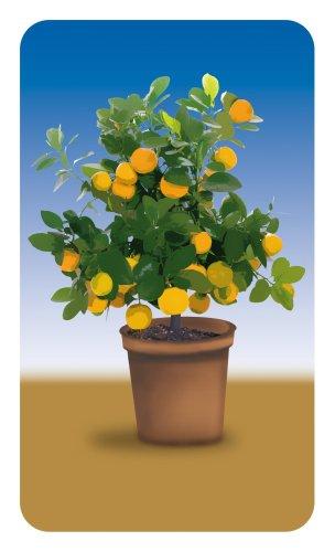 Wenko–Cubierta universal Planta Diseños Juego de 2