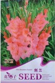 1 confezione originale 2 semi / semi di fiori pacchetto rosa gladiolo, pianta perenne semi bulbi
