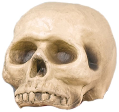 Amscan International Halloween-Dekoration, realistischer Totenschädel aus (Halloween Totenschädel)