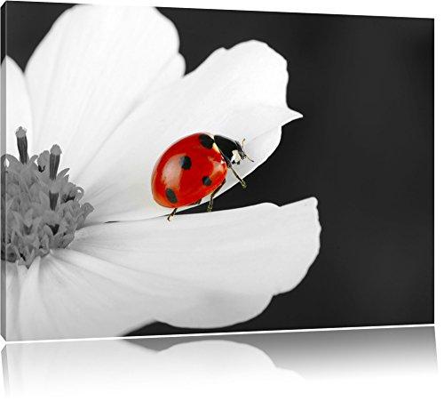 niedlicher Marienkäfer auf Blüte schwarz/weiß Format: 60x40 auf Leinwand, XXL riesige Bilder fertig gerahmt mit Keilrahmen, Kunstdruck auf Wandbild mit Rahmen, günstiger als Gemälde oder Ölbild, kein Poster oder Plakat (Schwarz Und Weiß-unkraut-poster)