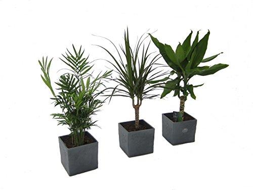 Dominik Blumen und Pflanzen 891823
