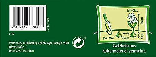 Quedlinburger 308522 Gefranste Begonie Mischung (Begonienzwiebeln)