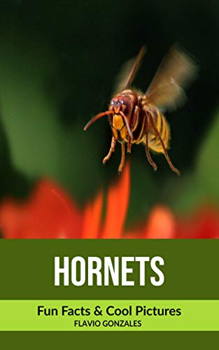 Hornets: Fun Facts & Cool Pictures (English Edition)