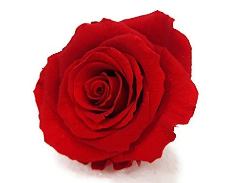 rosen-te-amo-eine-konservierte-rose-echte-rose-blume-blute-lange-haltbar-dazu-etwas-konserviertes-bi