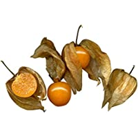 Andenbeere (Kapstachelbeere)(Physalis peruviana) 30 Samen