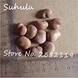 FERRY Semillas de Alto Crecimiento Solo no Las Plantas: Semillas Cushy-10 Semillas/Bolsa importada Baobab (Onia digitata) Seed s Outerdoor Semillas Bonsai Semillas orgánicas Crecer rápidamente