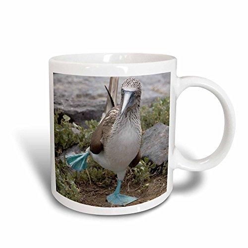 3dRose Ecuador Galapagos-Inseln Blue-Footed booby-sa07cmi0902-cindy Miller Hopkins-Magic verwandelt Becher, Keramik, Schwarz/Weiß, 10,16x 7,62x 9,52cm Blue Footed Mug