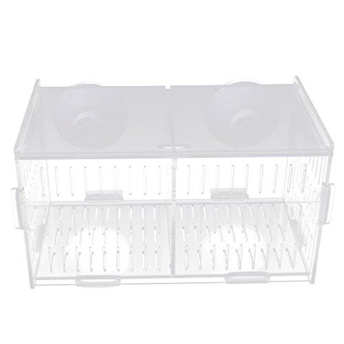 MagiDeal Acryl Fisch Isolation Box Zuchtbox Zuchttanks Brutkasten Inkubator Box - mit Saugnapf