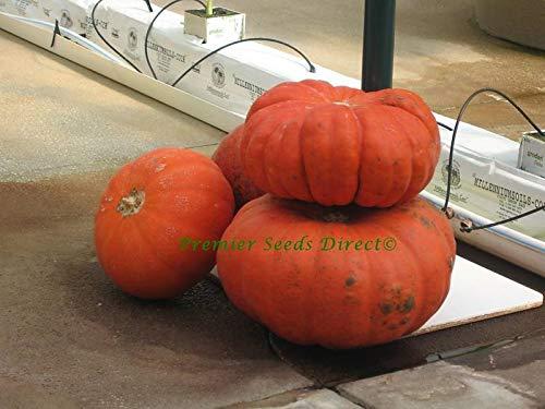 AGROBITS Vegetable Squash/KÃœRBISES Rouge VIF D'ETAMPES 55 See