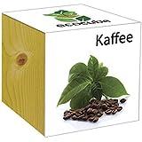 Extragifts ecocube Caffè - piante nel cubo di legno