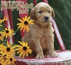 Puppies 2017 Wall Calendar (16 Month) by Paper Craft