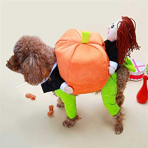 JING Halloween Kürbis Pack Hund Lustige Kleidung Teddy Sommer Kleiner Hund Kampf Welpen Macht Seltsame Kostüme Als Bären XL-Back Longueur 36 recommandé 15 jin à/Robe drôle de citrouille -