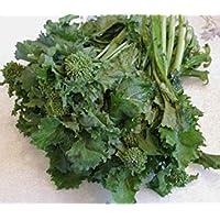 PlenTree La herencia Brócoli Raab primavera Rapini Rabeâ‹2000 Seedsâ‹Asparagoâ‹Opâ‹Non Gmo