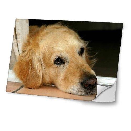 perros-10040-golden-retriever-diseno-mejor-pegatina-de-vinilo-protector-con-efecto-cuero-extraible-a