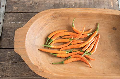 Go Garden Bell Paper Kilian intermédiaire- début Chili, fruits 8 cm Orange Longueur chaud savoureux