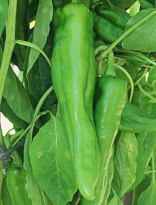 30 Samen von Numex Big Jim - Hot Peppers