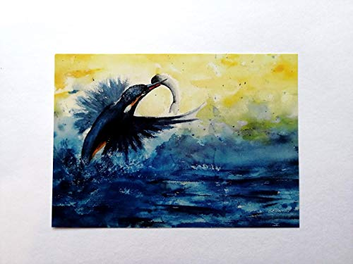 Foto Postkarte/Eisvogel/mit Umschlag/Format C6