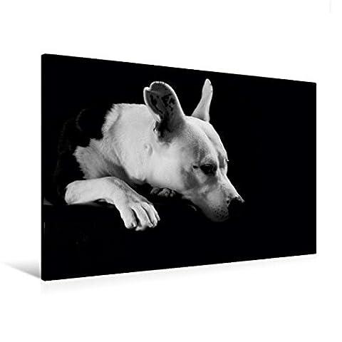 Premium Textil-Leinwand 120 cm x 80 cm quer, Cheyenne - American Stafford x Dogo Argentino-Mix, 2 Jahre | Wandbild, Bild auf Keilrahmen, Fertigbild auf echter Leinwand, Leinwanddruck (CALVENDO Tiere)
