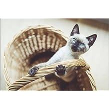Impresión en metacrilato 120 x 80 cm: Kitten de Sarah Kastner