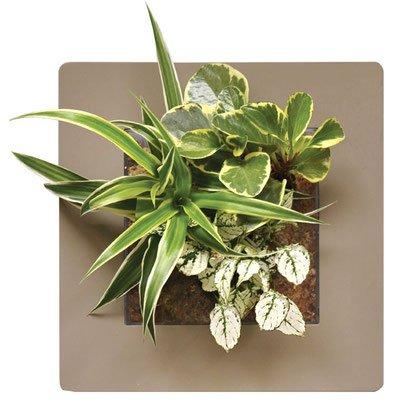 rahmen-fur-bepflanzung-in-2-verschiedenen-grossen-und-vielen-farben-erhaltlich-bewasserung-ohne-abne