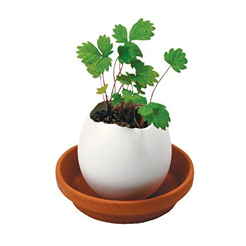 eggling-loeuf-plante-fraisier-by-sheishin
