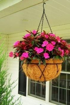 Creative Farmer Balsam - Good For Hanging Pot Flower Seeds