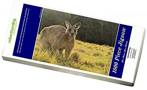 Photo Jigsaw Puzzle of Eastern grey kangaroo, Geehi, Kosciuszko National Park, New South Wales