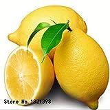 Fash Lady 5: 50 Stück/Beutel Zitronenbaum mit luftdichter Verpackung * innen außen verfügbar * Alte Obstsamen, Zitronensamen, 5 Stück