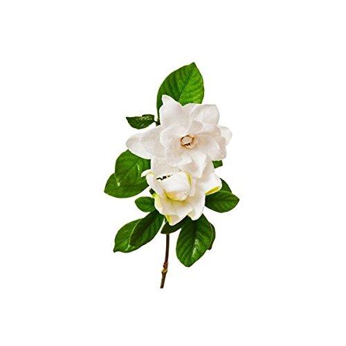 Gardenia, Seife, Duft -
