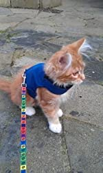 Mynwood Cat Jacket/Harness Blue Adult Cat - Escape Proof