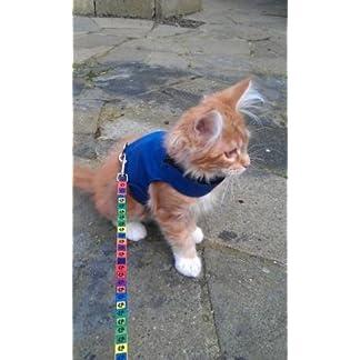 Mynwood Cat Jacket/Harness Blue Adult Cat – Escape Proof 419RxsbrIuL