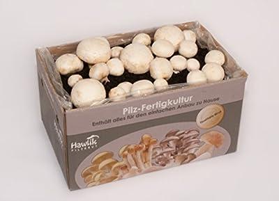 Champignon weiss - Pilzkultur zum selber züchten von Hawlik GmbH auf Du und dein Garten