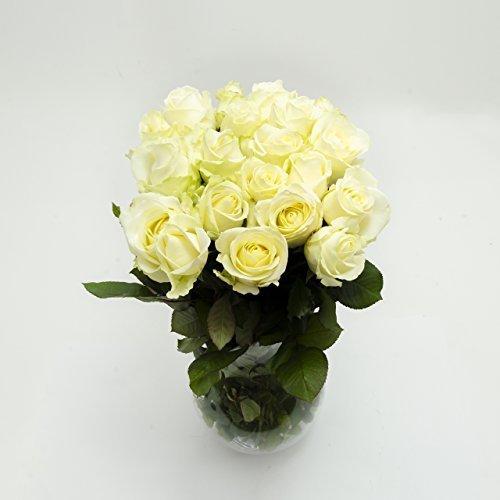 10 Bianco Rose in Colorati,ca 30 fino 40cm appena da Giardiniere,molto bene adatto come da San valentino/Festa della mamma,molto elegante Fiori di campo,Simbolo di Amore,Freude e Giovanile,fiori,