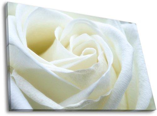 weie-rose-in-120-x-80-cm-hochwertige-leinwandbilder-kunstdrucke-dekoration-fr-ihre-wohnrume