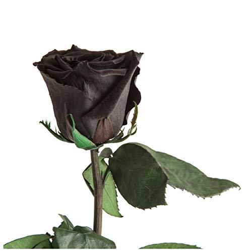 Infinity Rose haltbar 3 Jahre konservierte Rose die eine Ewigkeit blüht ROSEMARIE SCHULZ® (Schwarz)