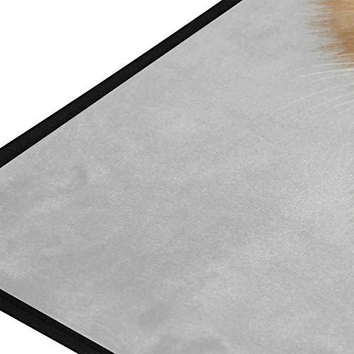 XiangHeFu Teppiche Neugierig Kätzchen Baby Katze Weiche 39x20 Zoll Fußmatten Teppich Personalisierte Matte für Küche Wohnzimmer Esszimmer Schlafzimmer Dekorative -