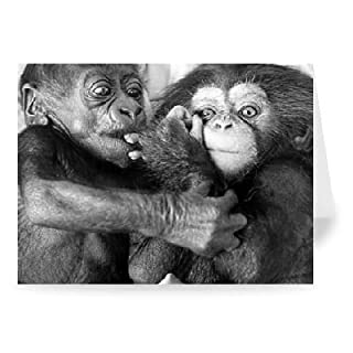 Asante the baby gorilla(left) and Becky the.. - Greeting Card (Pack of 2) - 7x5 inch - Art247 - Standard Size - Pack Of 2