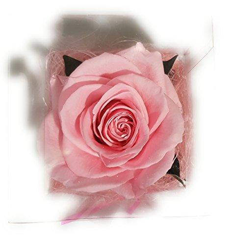 Rosen-te-amo