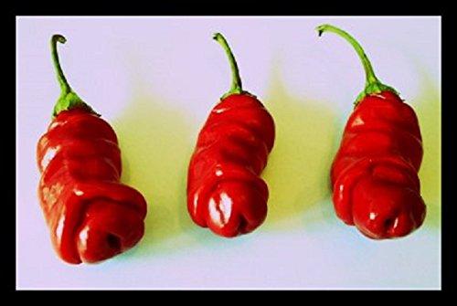 Penis Chili Rot 10 Samen (Peter-Pepper) 'Der Blickfang im Garten' >>>Eignet sich hervoragend als Geschenk<<<