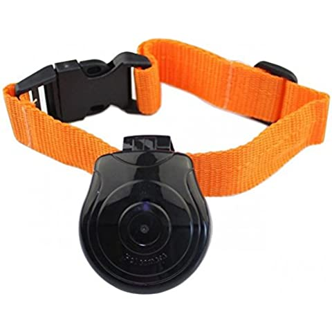 Sogno esterno Digital Pet Collar Cam Camera Video Recorder Monitor per cani gatti puppy