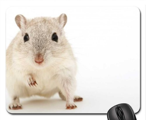gerbil-mouse-pad-mousepad-rodents-mouse-pad