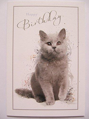 auschig grau Kätzchen Happy Birthday Grußkarte ()