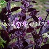Bloom Green Co. Verkauf! 300 PC/bag Große Blatt Basilikum Bonsai grn frisch ocimum Gemse Gewrze Aromatische Kruter Pflanze Bonsai Garten Pflanzen Blte: 8