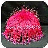 Pinkdose 100 Teile/beutel Bunte Schwingel Gras Bonsai Indoor Garten Festuca Mehrjährige Winterharte Zierpflanzen Einfach Wachsen Bonsai Sementes: 14