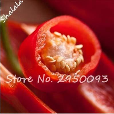 New Hot Chili Reaper Bonsai pot extérieur légumes arc-en-Pepper pour jardin 1000 pièces/ing sac rouge 1 (SEULEMENT) GRAINES