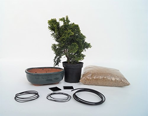 bonsai-starter-kit