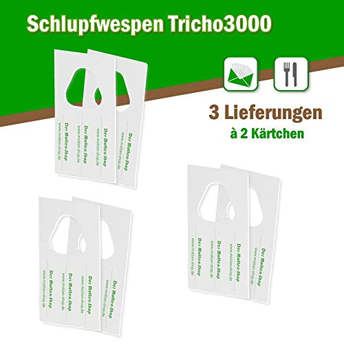 Der Motten-Shop Schlupfwespen gegen Lebensmittelmotten 6000 Stück x 3 Lieferungen auf 2 Karten