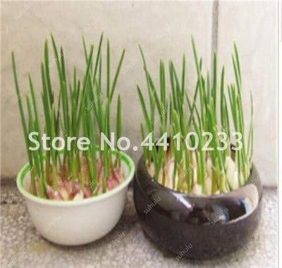 ferry 200pcs solo giappone tubero scalogno piccolo bonsai nutrizione evergreen vegetali rare non ogm-organic kitchen condimento alimentare: k