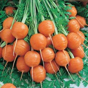 600 Samen - 6 Sorten - 6 Leuchtende Farben Regenbogen-Karotten-Samen-Kollektion -